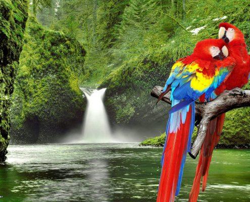 Ara (Macaw) Papağanı