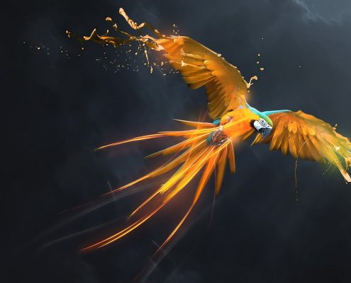 Ara Papağanı