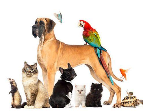 Evcil Hayvan İsimleri