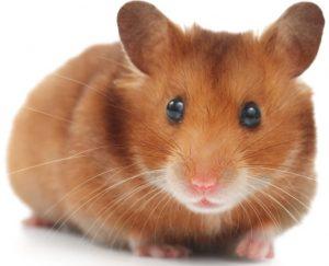 Hamster İsimleri