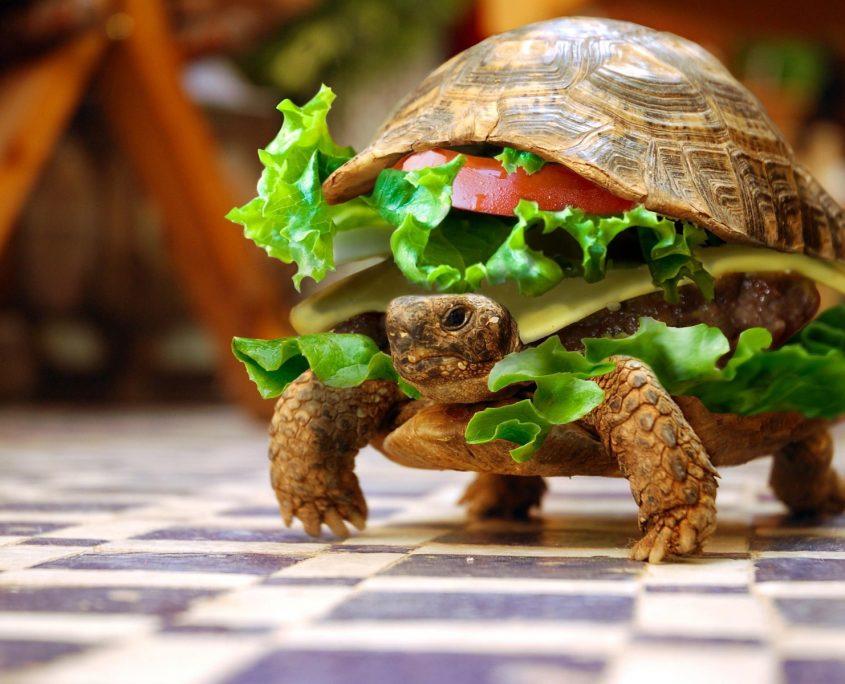 Kara Kaplumbağası Wallpaper