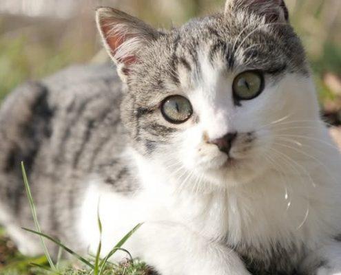 Kedi Bakımı