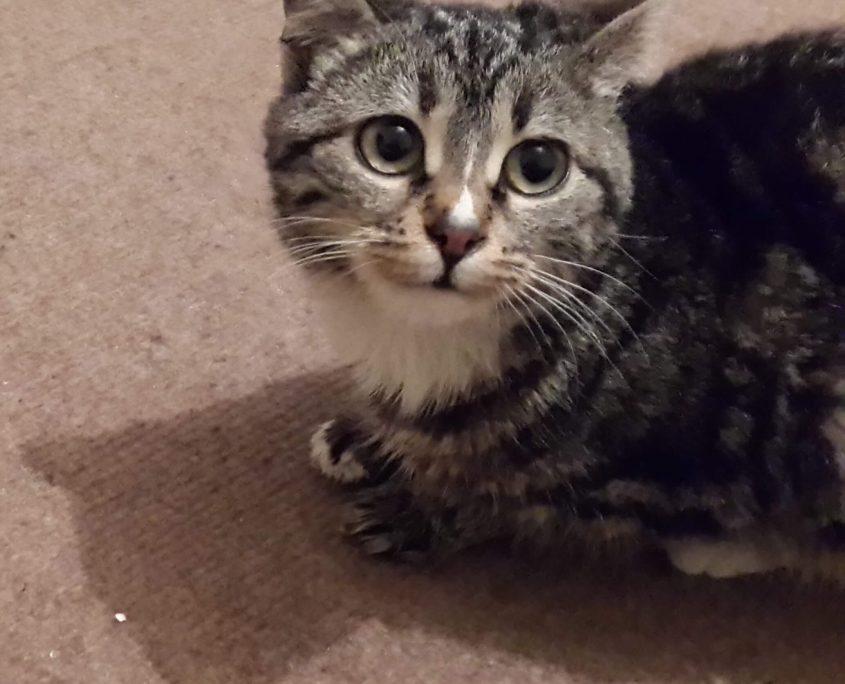 Kedi Beslenmesi