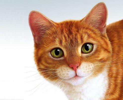 Kedi Hastalıkları