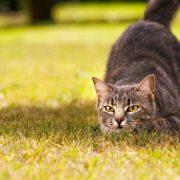 Kediler Hakkında Temel Bilgiler
