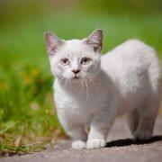 Kedilerde Hamilelik ve Doğum