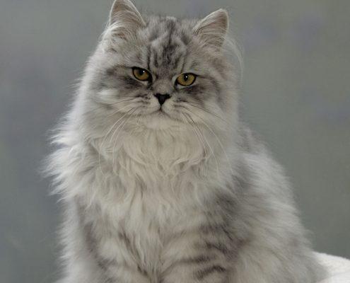 Kedilerde Kısırlaştırma