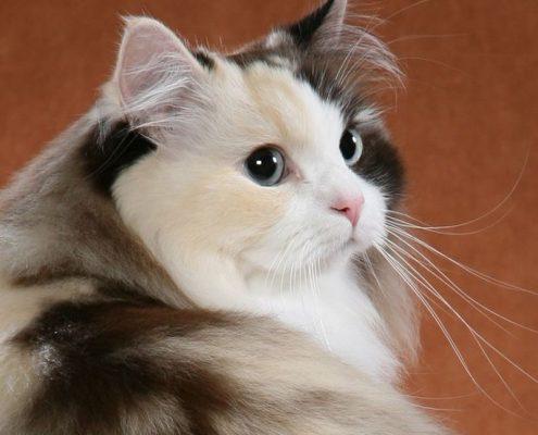 Kedilerin Isırma ve Tırmalama Davranışları Nasıl Engellenir?