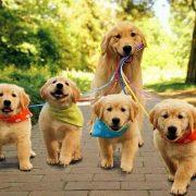Köpek Aşı Takvimi