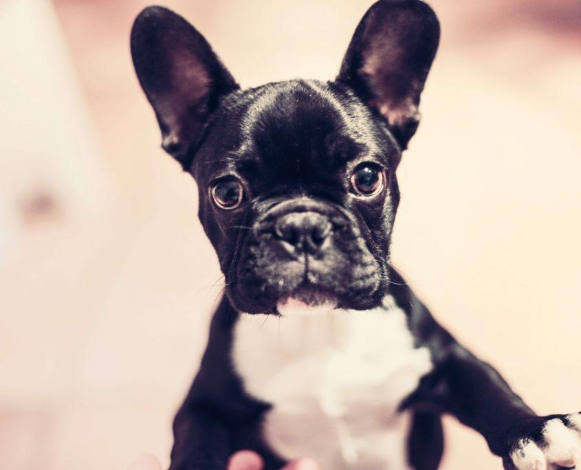 Köpek Resimleri
