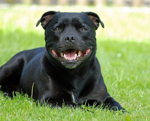 Köpek Hastalıkları
