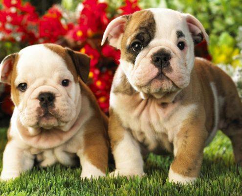 Köpek Maması Seçimi Nasıl Yapılmalıdır?