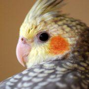 Papağan İsimleri