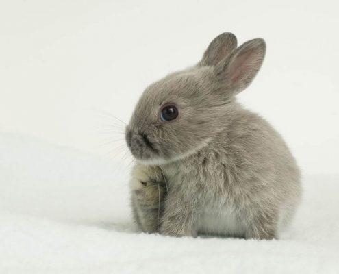 Tavşan Yaşı Hesaplama