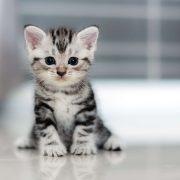 Yavru Kedi Bakımı ve Beslenmesi