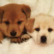 Yavru Köpek Bakımı ve Beslenmesi