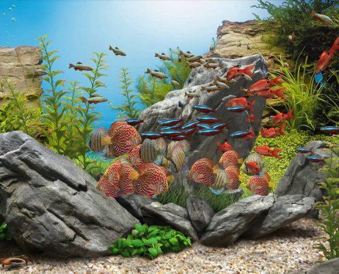 Hangi Balıklar Bir Arada Yaşayabilir?