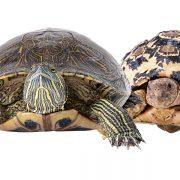 Kaplumbağa İsimleri