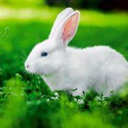 Tavşan İsimleri
