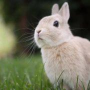 Tavşan Fotoğrafları