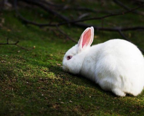 Tavşan Galerisi