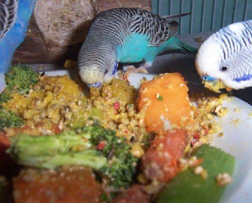 Muhabbet Kuşu Beslenmesi