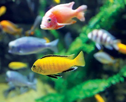 Balık Galerisi