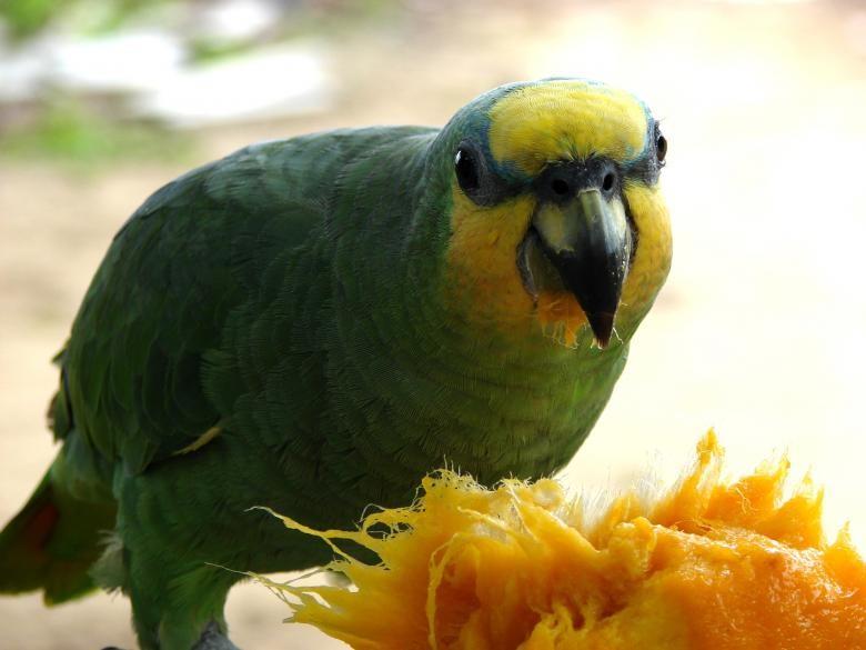 Papağan Beslenmesinde Püf Noktalar