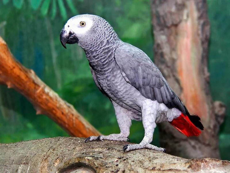Papağan Hastalıkları