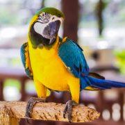 Papağanlara Eğitim Nasıl Verilir?