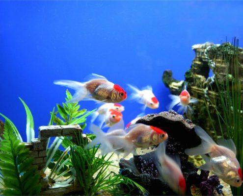 Akvaryum Balıkları için Bazı Püf Noktalar