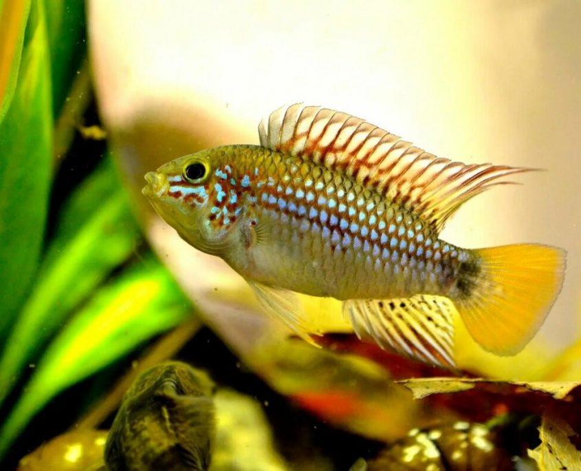 Akvaryum Balıklarında Stres Nasıl Önlenir?