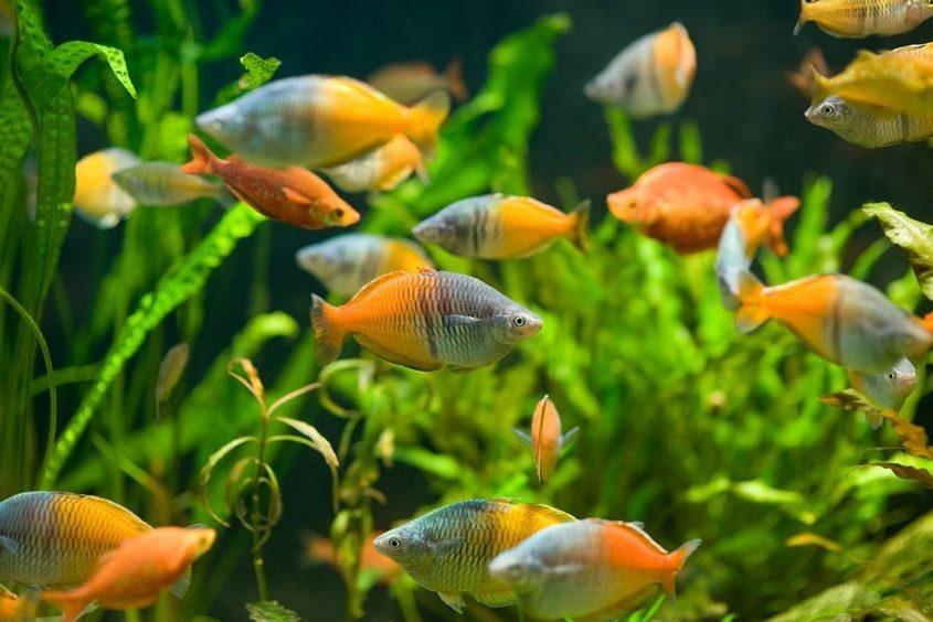 Akvaryum ve Balıklar İçin Temel Bilgiler